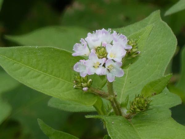 この植物の名前教えてくださいね。