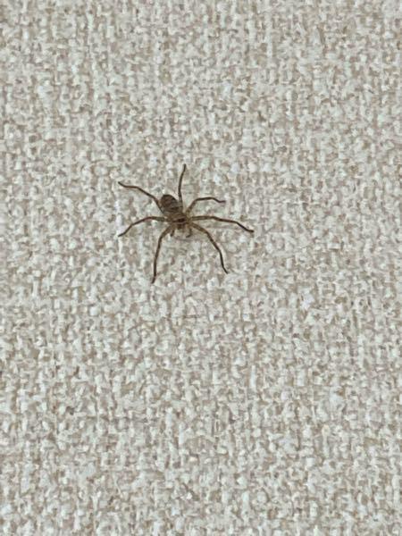 家にいたんですがこれはアシダカグモですか?