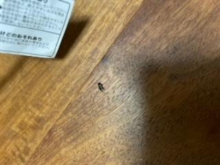 これなんて虫ですか? ちっちゃいゴキブリみたいで怖いです。 大きさは5mmぐらいで、どこから湧いてきたのかわかりません。畑が近いからでしょうか?