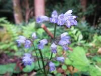 9/24 福岡県背振山系で撮りました。この植物の名前をご教示ください。