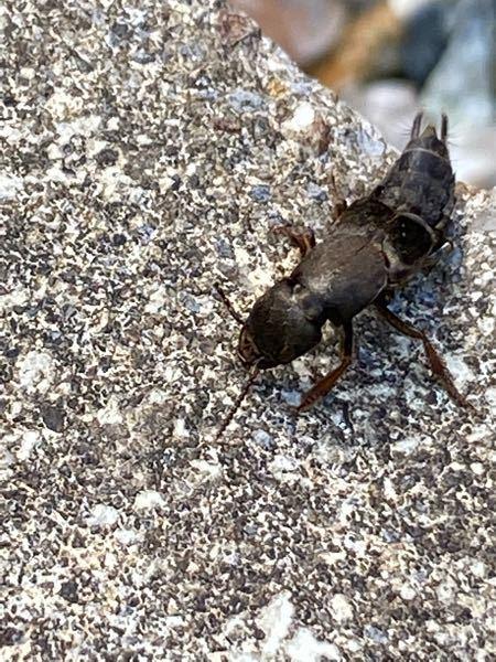 こいつはなんて言う虫ですか?