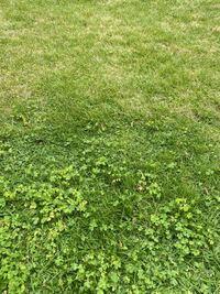 芝生に三つ葉のような雑草がどんどん 増えて困ってます。何か良い対処法が あれば教えて下さい。