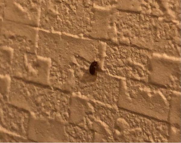 家のトイレに、ノミに羽根が生えたような虫が何匹かいました。これは何という虫でしょうか?