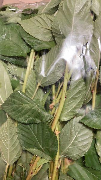 この野菜の名前わかる方いますか? 陸前高田市のふるさと納税で入っていたものです。