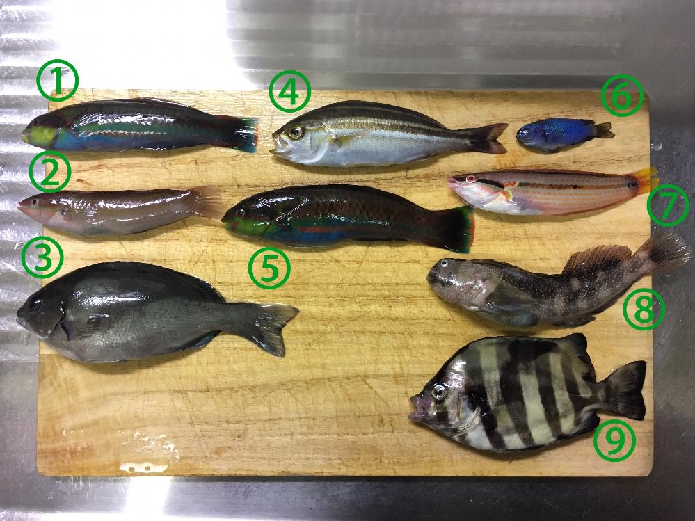 魚の名前が知りたいです。 全て今日江ノ島で釣れた魚です。 個人的に以下の魚は予測してみましたが、合っているかどうか分かりません。 ①, ⑤ニシキベラ ③メジナ ④イサキ ⑥ルリスズメダイ(?) ⑦キ