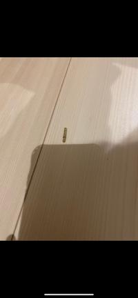 助けてください! 新築の家に発生しました。 ①何の虫で②なぜ発生したのか②どのように駆除するのが良いか 教えてください! よろしくお願いします。
