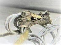 昆虫?ですが、名称を教えてください。 玄関の電灯にとまっていました。