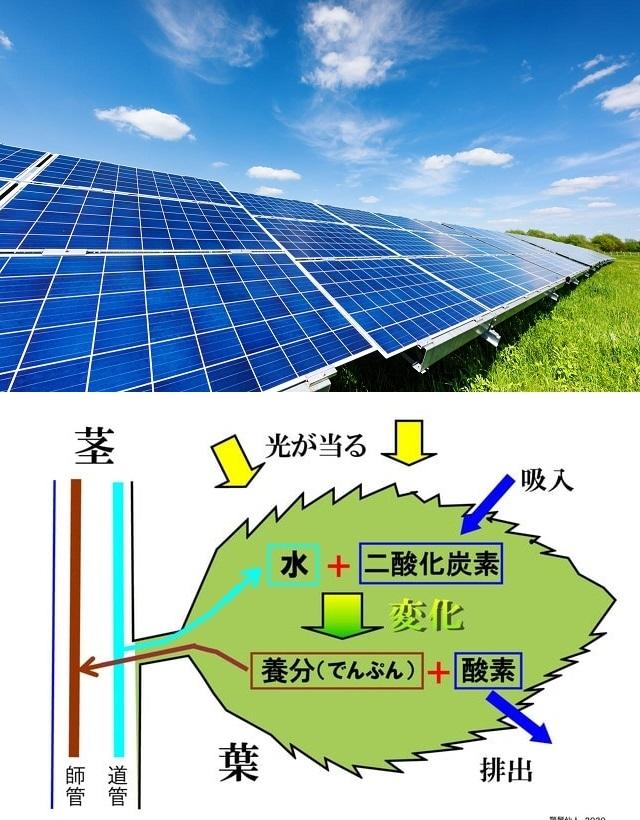 太陽光発電よりも、植物の光合成の方が千倍も優秀なのですか? エネルギー生産効率 . 近年、無公害なエネルギー生産システムとして太陽光発電が注目されていますよね、私の住む街にも数か所ほどソーラーパネルを見かけています。 ですが、あることを聞きました。それは 「最新鋭のソーラーパネルによる太陽光発電よりも、樹木草花の葉による光合成の方が、同じ面積ならばおよそ1000倍以上ものエネルギーを生み出せている! しかも、植物はエネルギーのみならず酸素さえも生み出しているのだから、優秀極まりない」 ……とのことでした。 どうなのでしょう、樹木草花の葉は、太陽光発電ソーラーパネルのおよそ1000倍以上も優秀なのでしょうか? エネルギー生産効率において。 それとも、これは誇張された話に過ぎないのですかね? もしかして最新のソーラーパネルは、植物の光合成と同等以上のエネルギーを生み出せているのでしょうか? エネルギー生産や光合成に関心のある方など、ぜひ皆様のご意見をお聞かせください。 画像はクリックすれば大きく見れると思います。