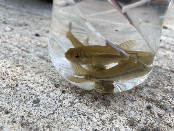 この魚の名前分かりますか?