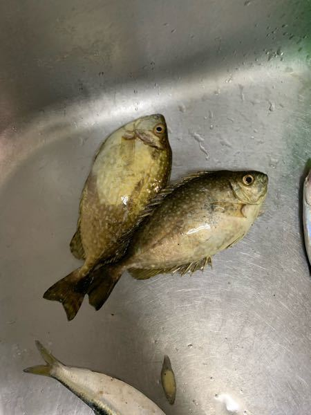 この魚なんていいますか? 食べれますか?