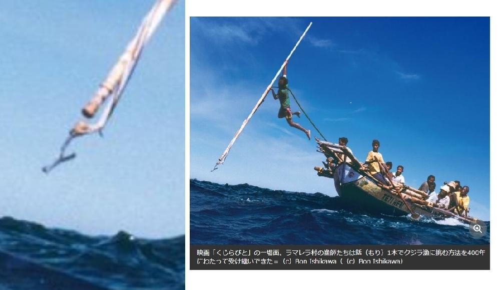 伝統のクジラ(鯨)漁の勇敢な写真です。長槍(銛)の先端が不可解な形ですが、どうなっているのでしょうか。鯨に刺さって抜けない仕掛けの綱付き銛(もり)でしょうが形が不思議です。