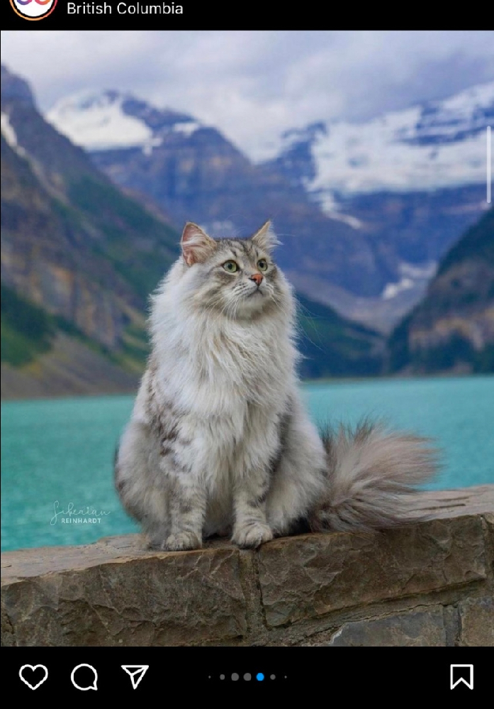 この猫ちゃん、なんて種類でしょうか? 普通に家で飼えますか?