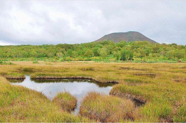 100枚 こちらの写真は、北海道のどこの湿原はご存知の方いらっしゃいますか?m(_ _)m