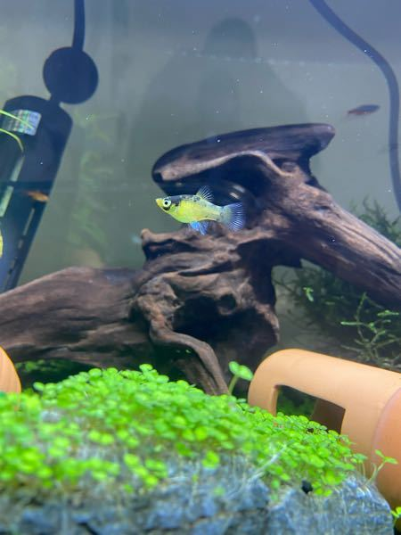 この魚の名前を教えていただきたいです。 ご存知の方はよろしくお願いします