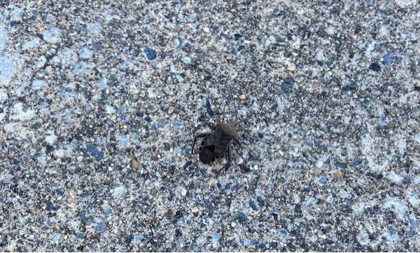この虫はなんでしょう? わかる方いらしたら教えて頂きたいです。 宜しくお願い致します。