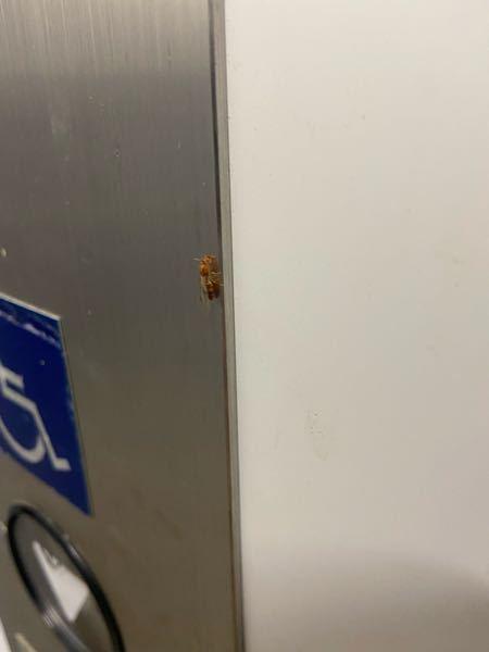 駅に1匹だけ居ました これはヒアリですか?写真見にくくてすみません