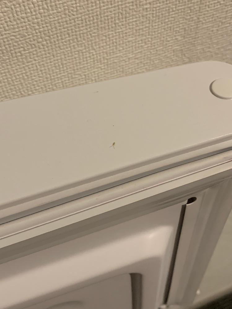 ホテルに滞在中ですが、小さい虫が何匹か居ます。 ひとつはチャタテムシのようですが、もう一つのムシが何かわかりません、ゴキブリの赤ちゃんかとも思いましたがネットで調べると違うような、、わかる方教えて頂きたいです。。