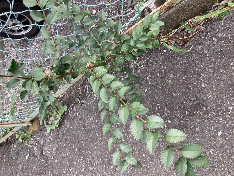 この植物の名前を教えてください。 よろしくお願いします!