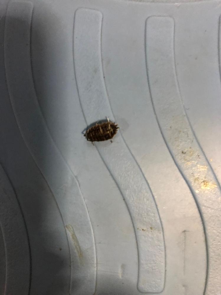 この虫の名前を教えてください!
