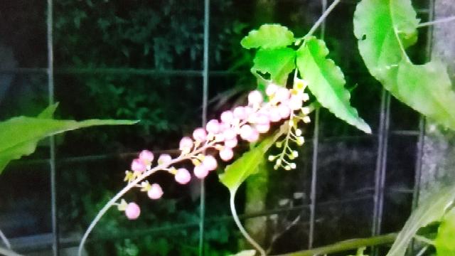 この植物(花)の名前は何でしょうか? 教えてください。
