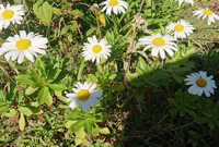 この花の名前教えて下さい。