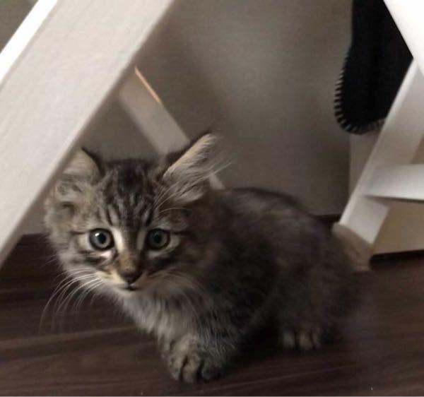 これなんて猫ですか?
