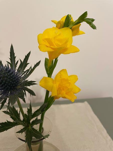 この黄色のお花の名前はなんですか? あまいとてもいい香りがします。 よろしくお願いします。