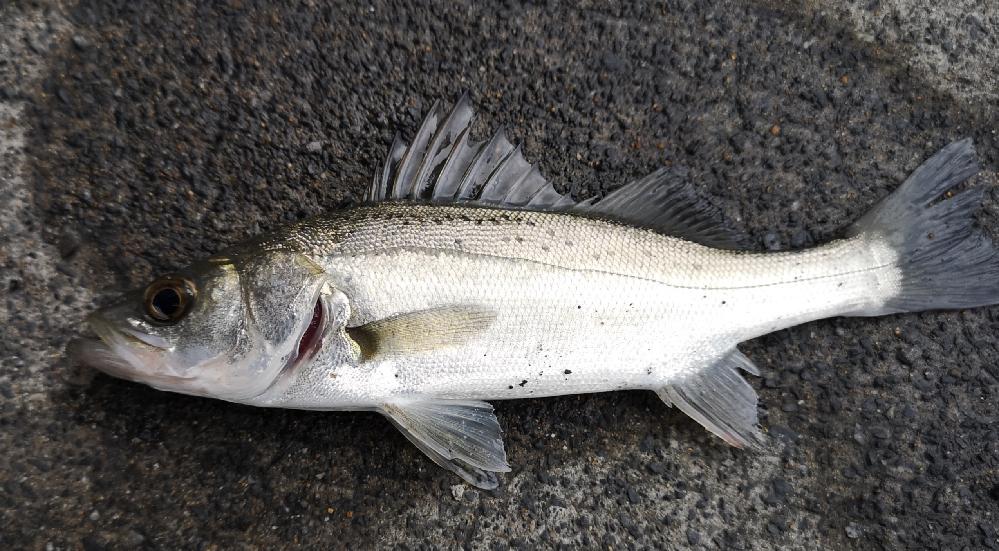 魚の名前が知りたいです