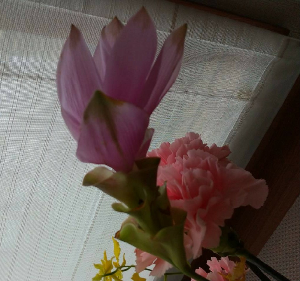 この花はなんと言う花ですか?