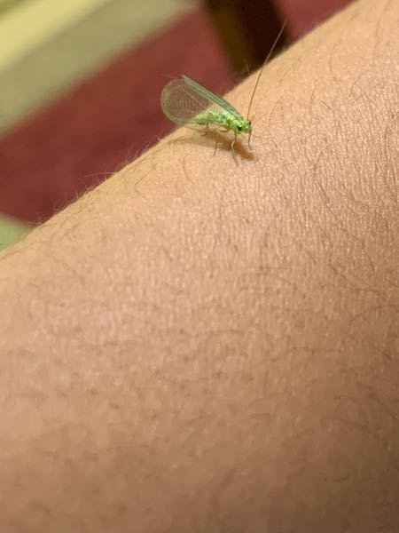 この虫、何て名前でしょうか?