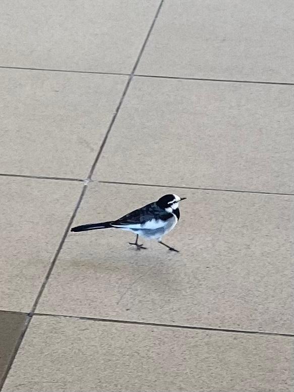 この鳥はなんていう鳥ですか?