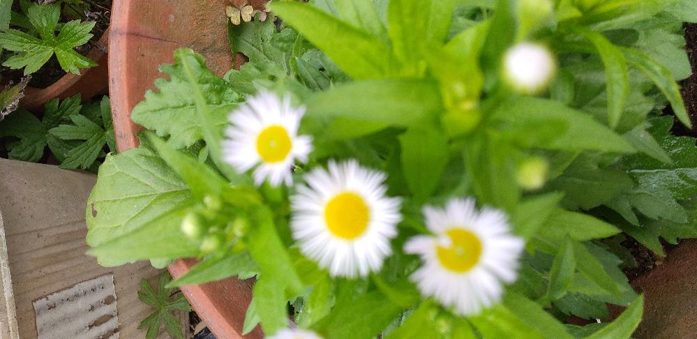 すこしボケていますが 添付の花の名前を教えてください。