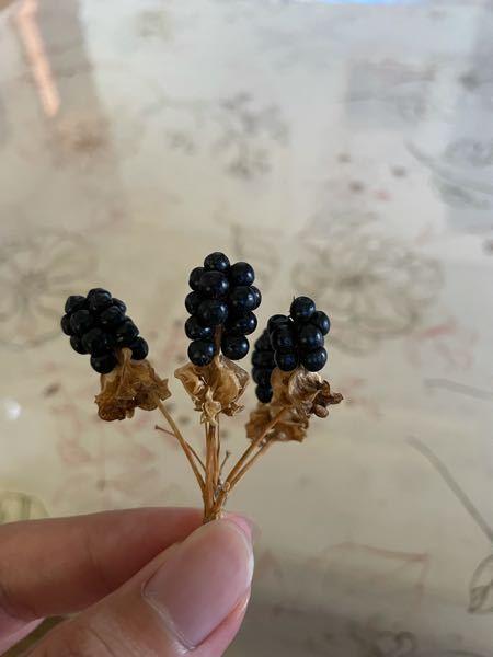 これはなんという植物の種ですか?
