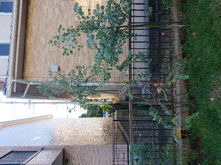 庭に苗を1年以内に買って植えたレモンユーカリや、ユーカリポポラスです。 この夏にぐんぐん背が伸び、 支柱をつけましたが、 風とともゆれ、斜めに傾きます。 根元に大きな石を置くなど して、まっすぐにするのですか? おしゃれなやり方が あれば教えて下さい。
