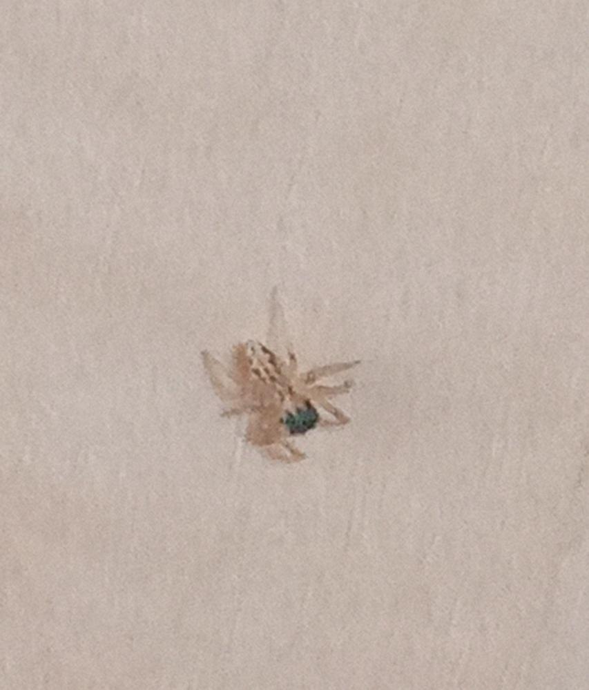 さっき家のトイレであまり見かけない蜘蛛をみつけました。結構小さいです。種類など、わかる方がいれば教えて下さい☆