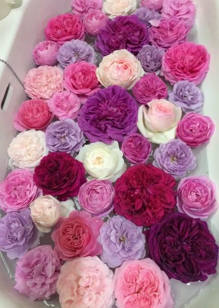 これ何の花?