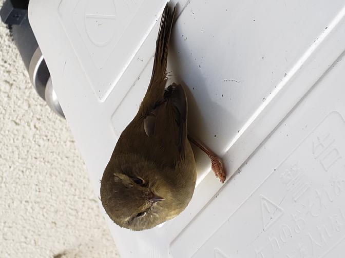 この鳥は何と言う鳥か分かりますか?