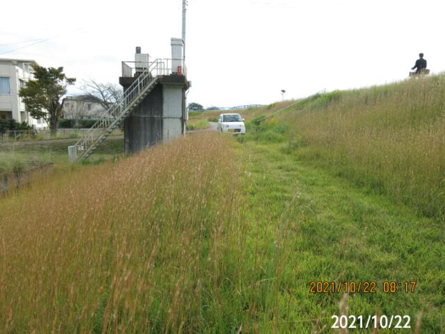 うす茶色の穂はチガヤですか? 岐阜県美濃加茂市太田橋堤防で、 撮影20211022