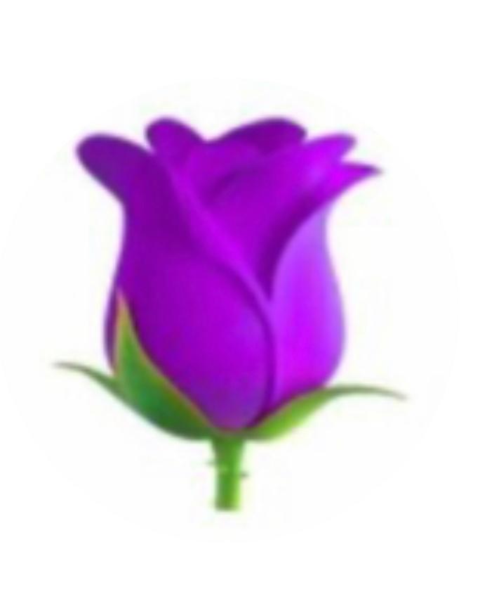 紫の薔薇の花言葉を教えてください。