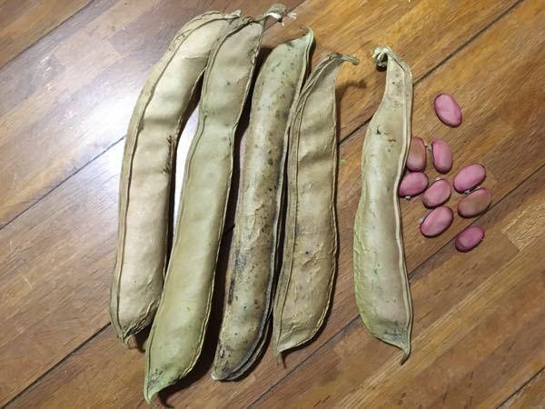 これは何という豆でしょうか? 凄く硬い実なんですが 調理して食べるのは可能でしょうか?