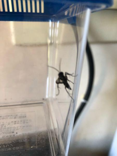 この虫はなんでしょうか。