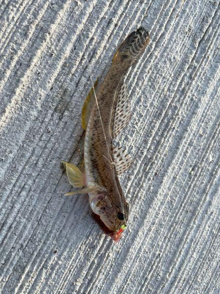 この魚はなんでしょうか? 食べれますか?