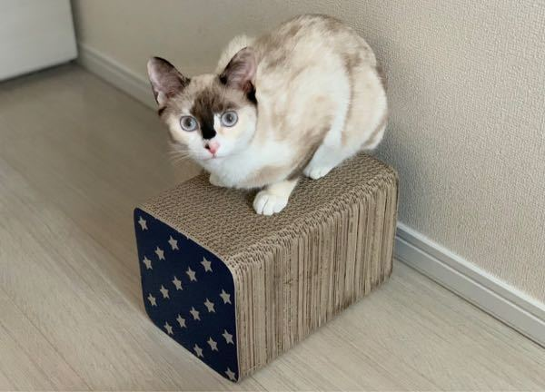 雑種の猫を飼っていますが 引き取ってから1年経った今も 柄の種類が分かりません。 補足として、 きょうだいで2匹引き取り 1匹はオスで恐らくサバ白です。 そして分からないこの猫の 性別はメスです。 分かる方いましたら 教えて頂けたらと思います。 よろしくお願いいたします。