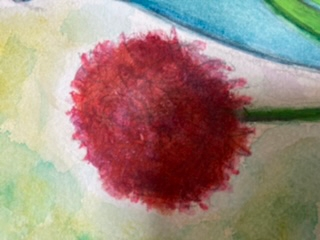 この花の名前ご存知の方いらっしゃったら教えてください。 ふわふわした球体のものです。