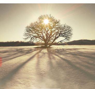 この写真の木の名前や 場所が知りたいです。 宜しくお願いします。 砂漠?