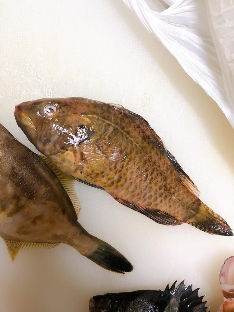 この魚はなんの魚でしょうか? 食べられますか? 教えて貰えると助かります。 よろしくお願いします。