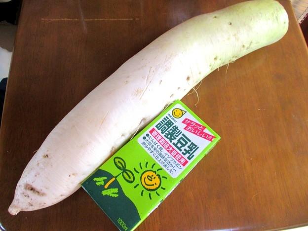 巨大根は冷蔵庫に入らない、切るのも大変ですか?