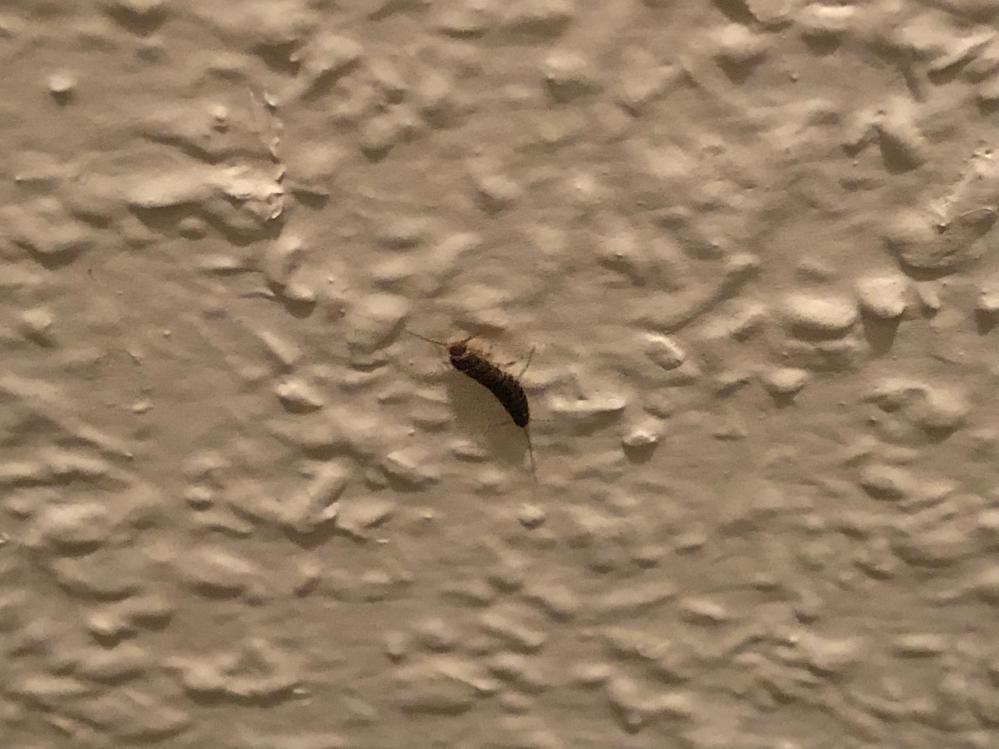 この虫は何の虫ですか? 夜帰ってきてトイレに行くとたまに壁に張り付いてます。気持ち悪いので対処法があれば教えてください。