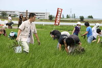田んぼに金魚を放流しようと思っているのですが、田んぼの中には金魚の餌になるものはあるのでしょうか?  ちなみにうちの田んぼは無肥料・無農薬で、錦鯉を飼っています。 http://kyouryokutai.seesaa.net/cat...