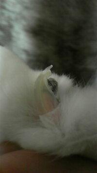 飼い猫の爪の中の黒い部分が気になります。心配です。 手足全ての爪でなく、指2、3本一部です。  画像は普通の爪の部分を切ったものです。  室内のみで15年以上飼ってます。 これはなんなのでしょうか…?